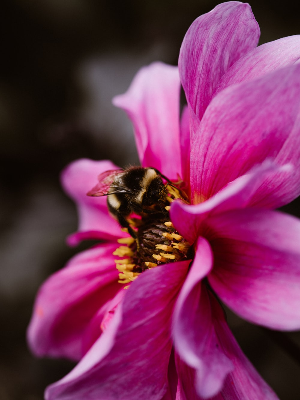 bee perching on pink flower