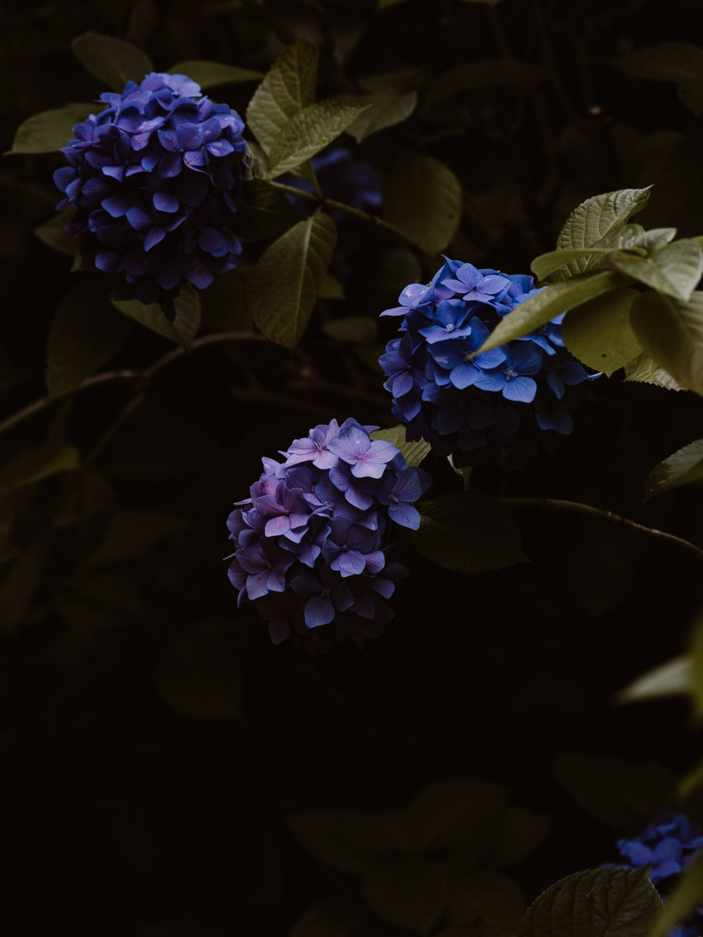 shallow focus photo of blue flowers