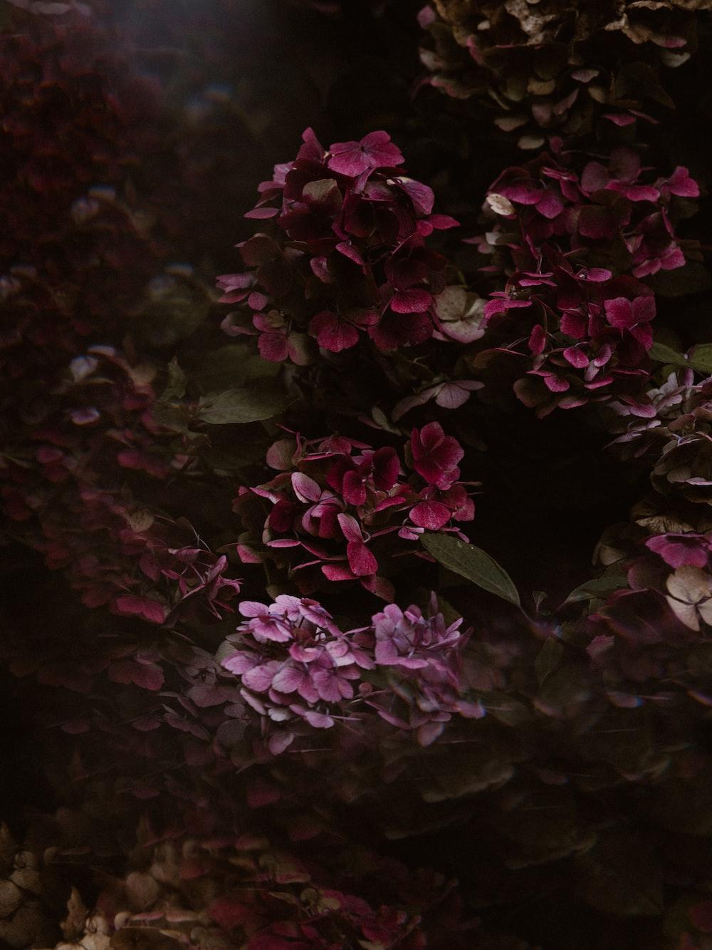 pink petaled flower plant