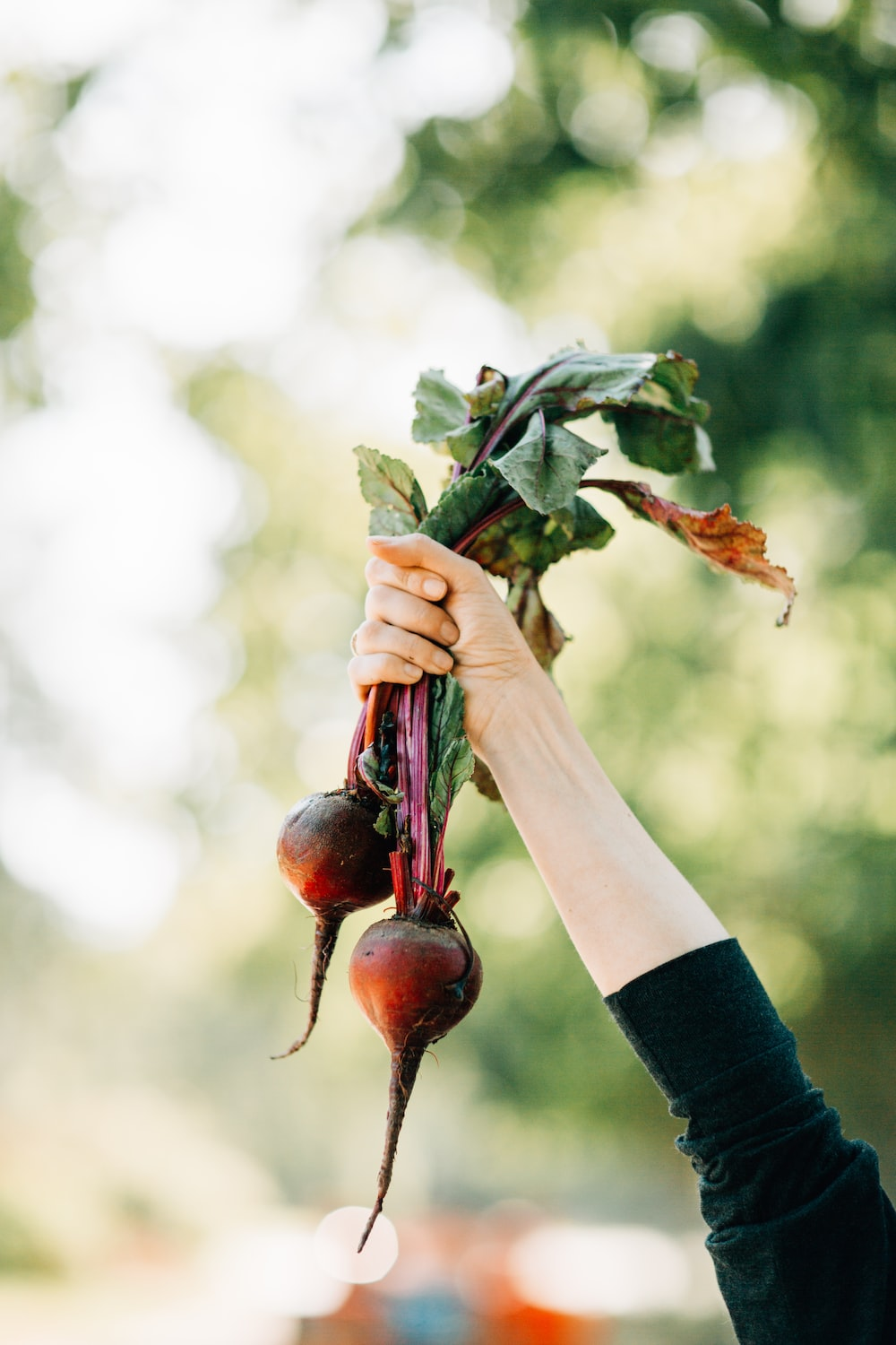 person holds two turnips