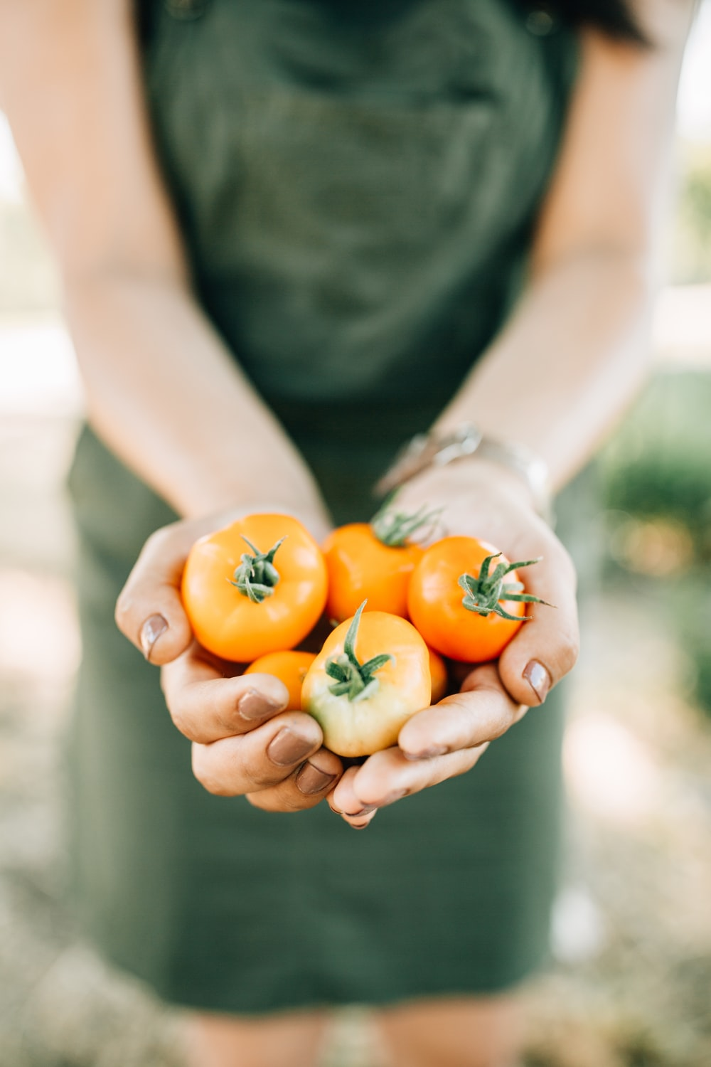 red tomatoes on person's palm