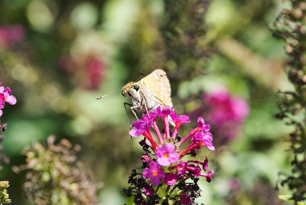 beige moth on pink encrusted flower