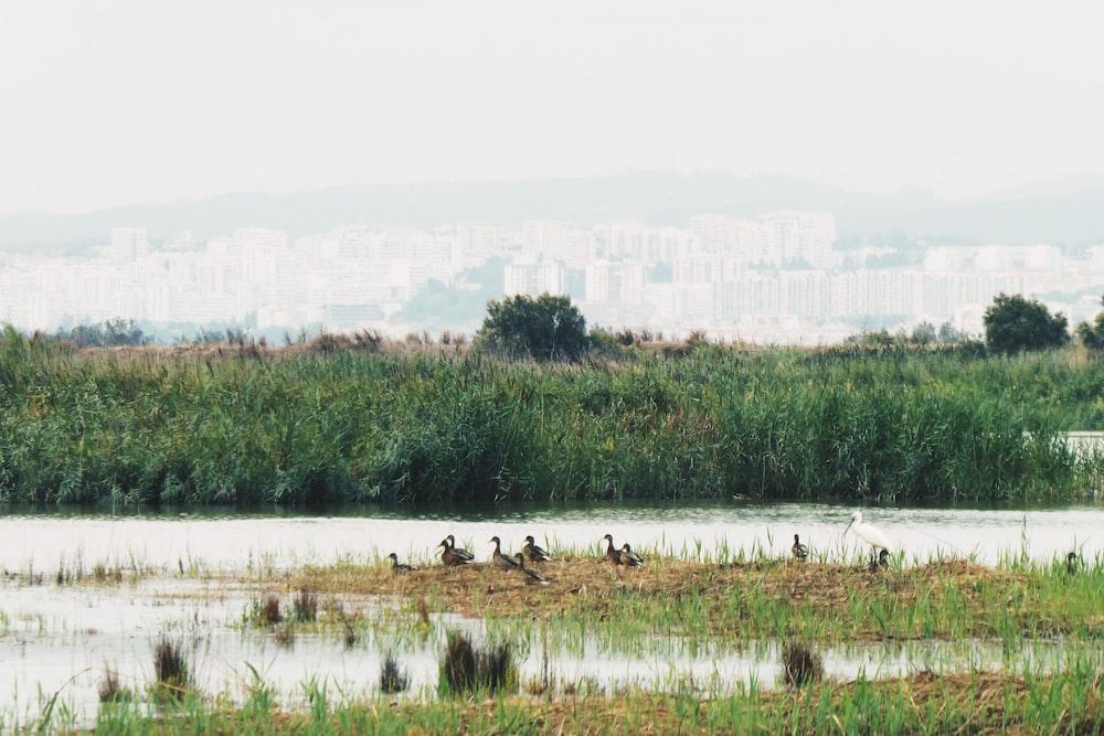 ducks near body of water during daytime