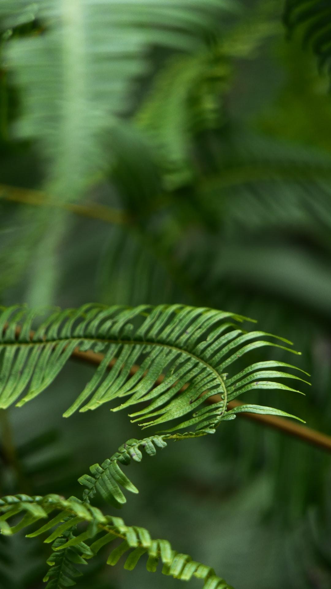 Twisted Ferns
