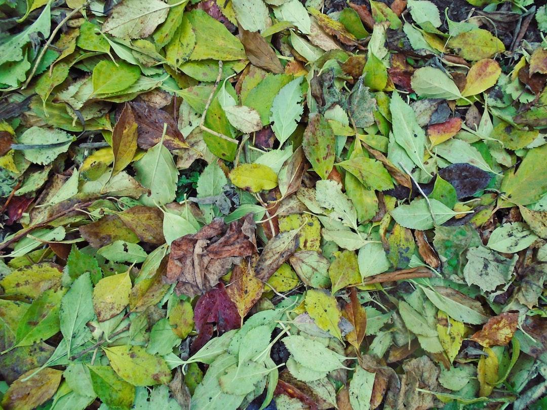 Freshly fallen leaves on ground