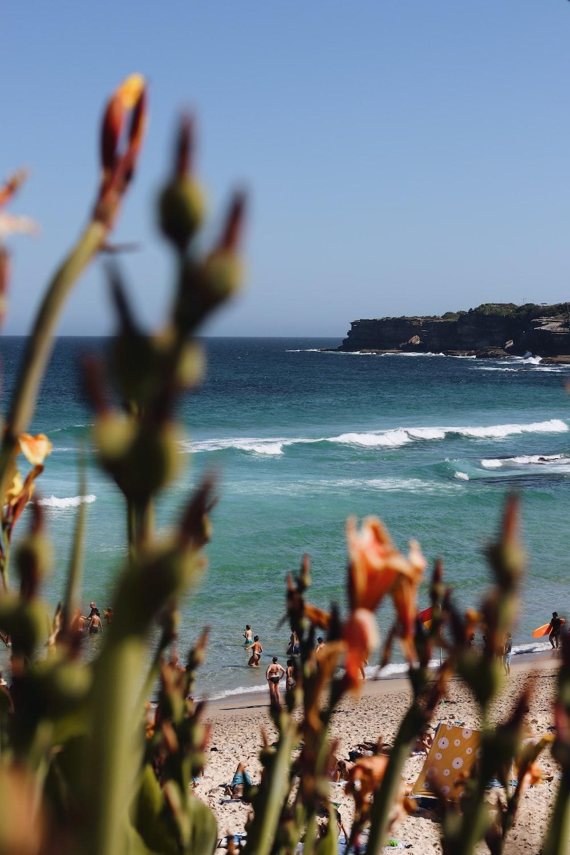 plants on seashore during daytime