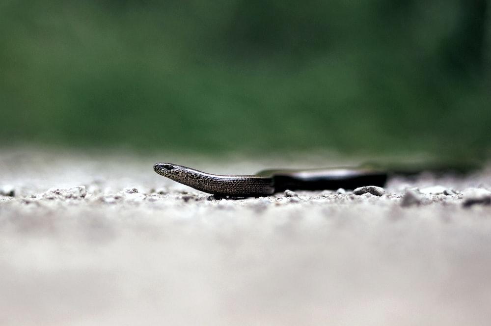 brown snake ona gray floor