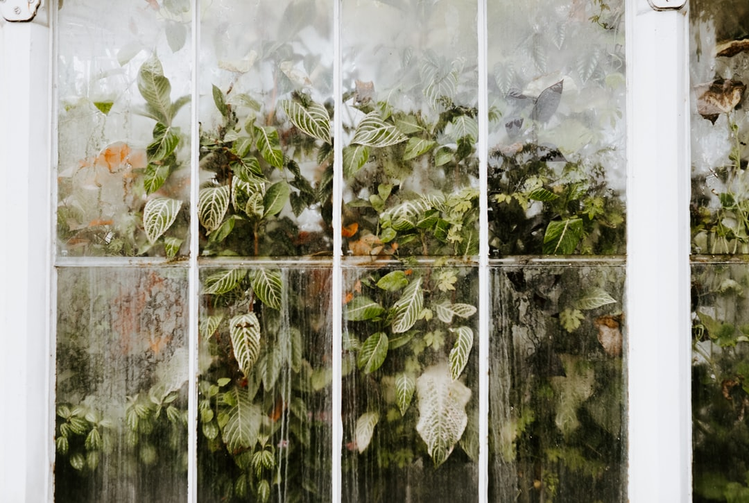 Glasshouse and leaves