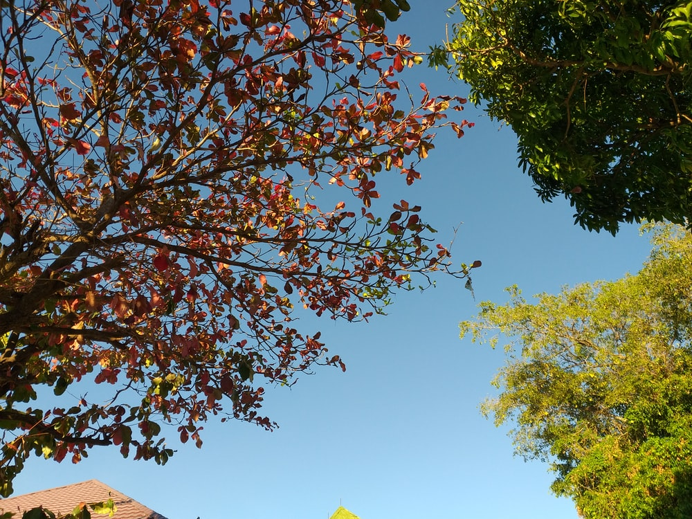 low angle view of trees under blue sky