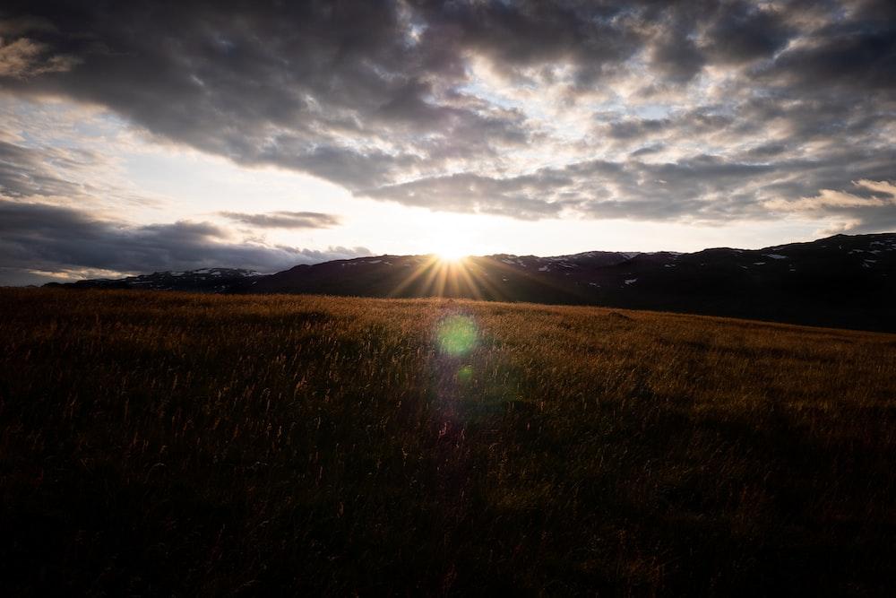 grass field during daytime