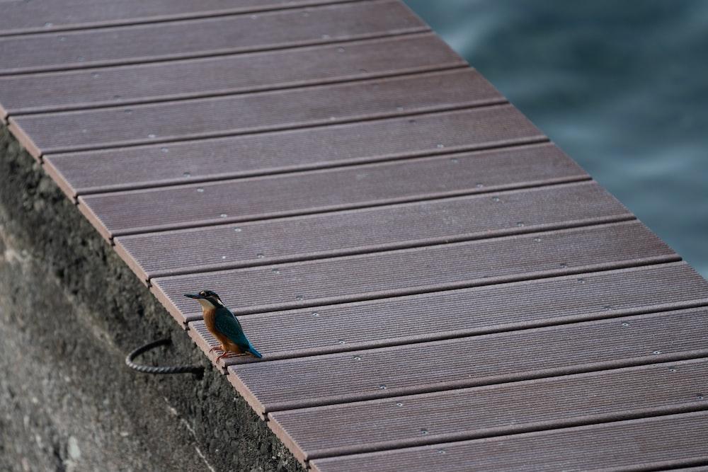 closeup photography of bird perching on dock