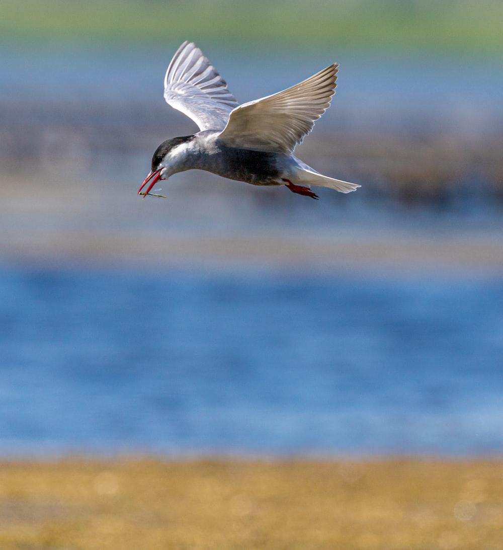 gray bird at daytime