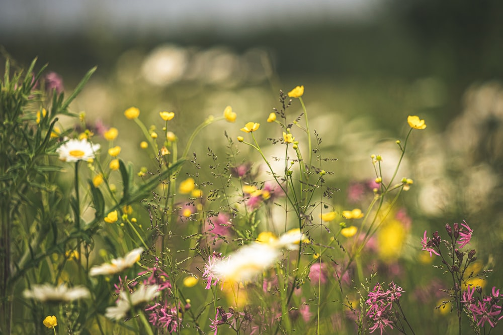 white and yellow petaled flower field during daytime