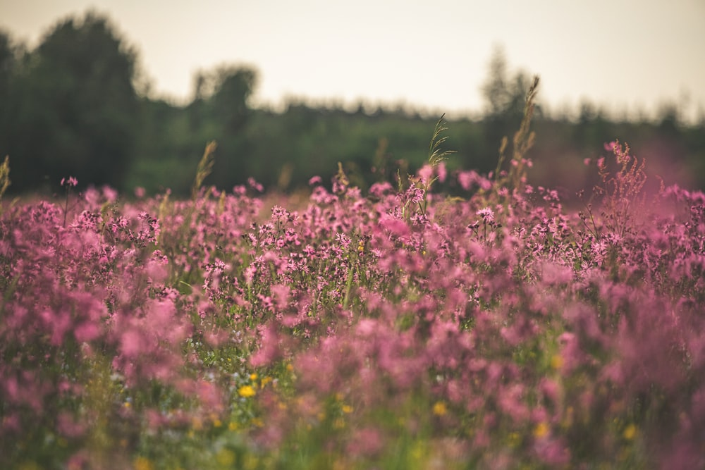 pink petaled flower field during daytime