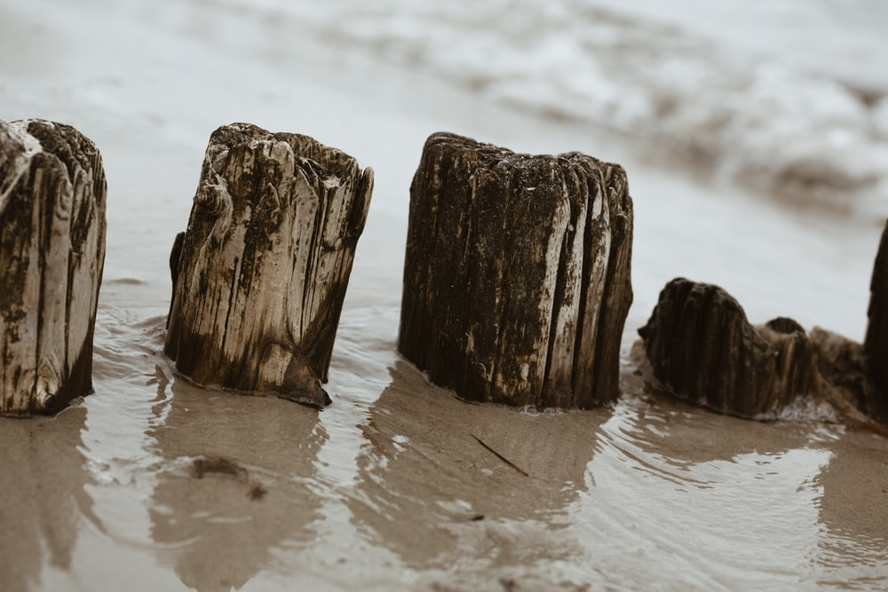 closeup photo of driftwood on shore