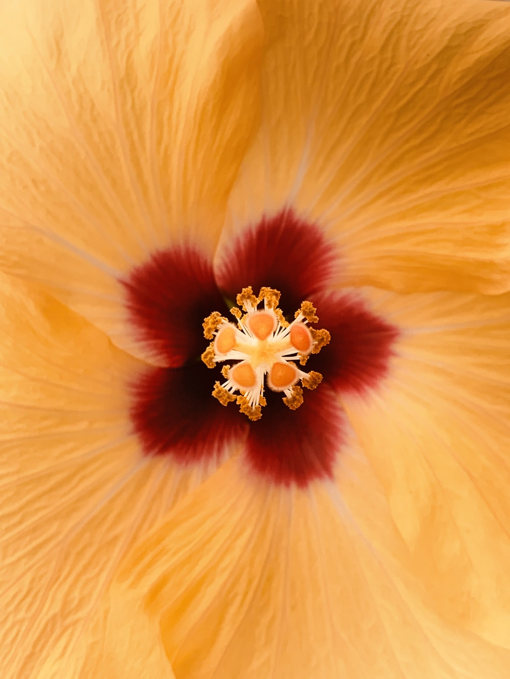 selective focus photo of yellow Hibiscus flower