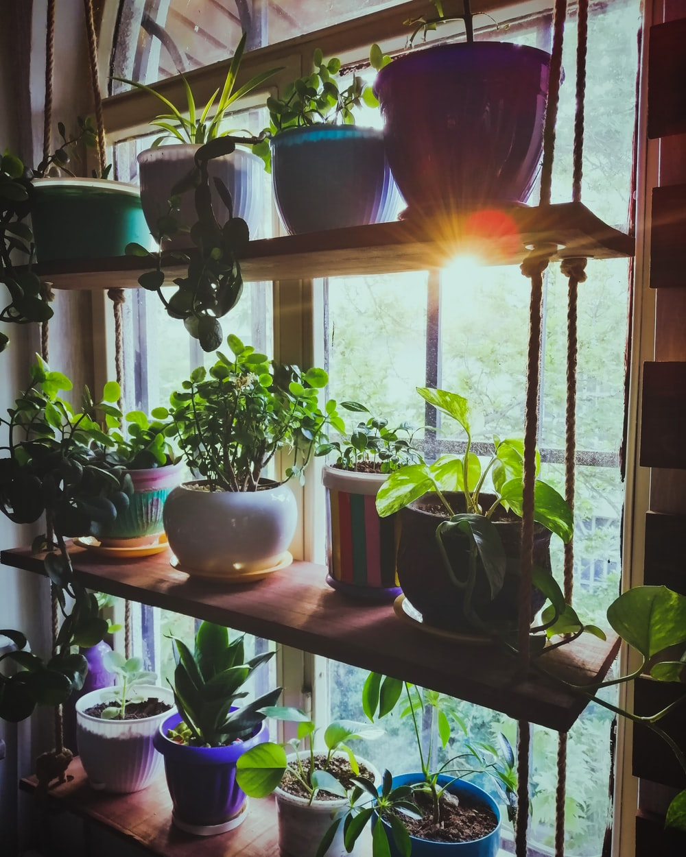assorted leafed plants in rack