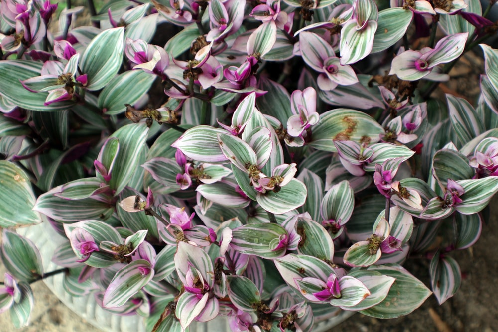 purple and green-leafed plant