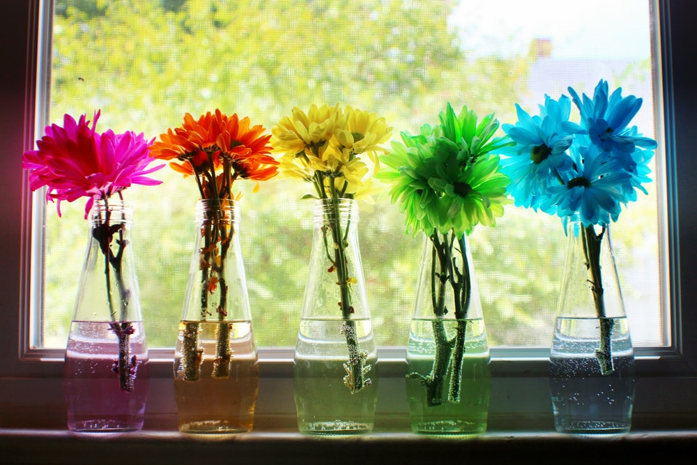 five assorted-color flowers