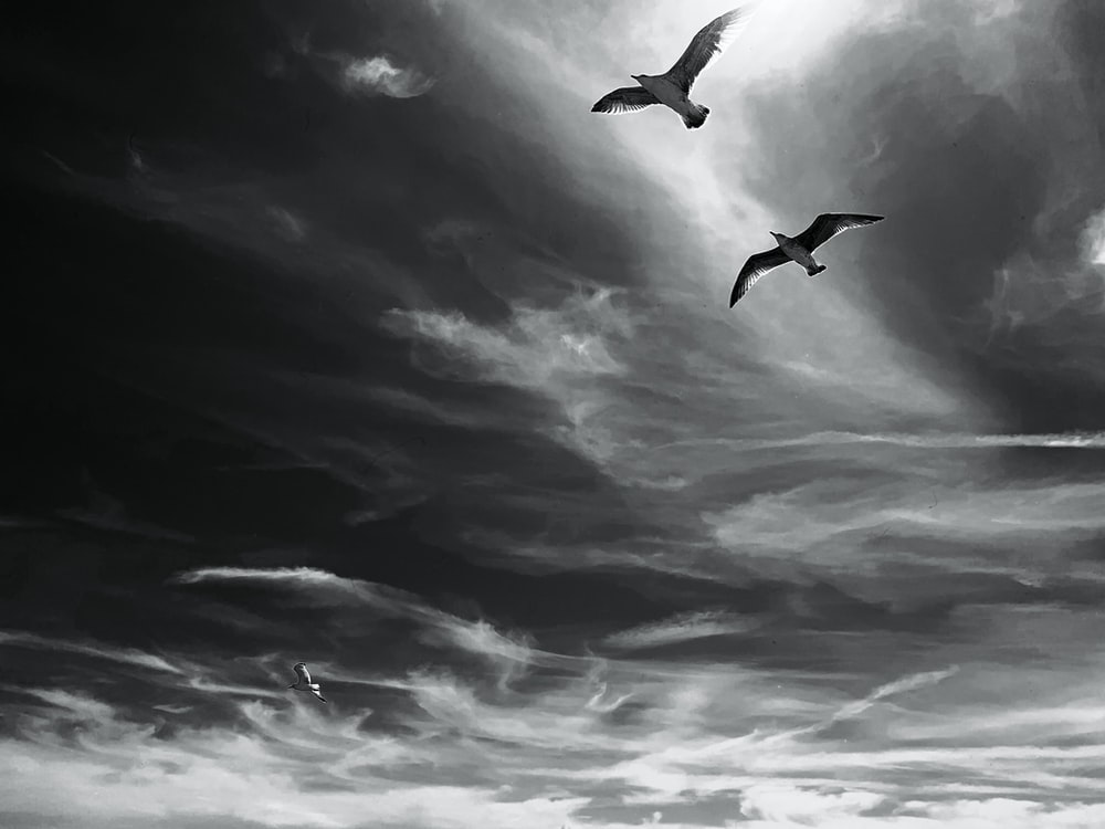 grayscale photo of birds flying under cloudy sky