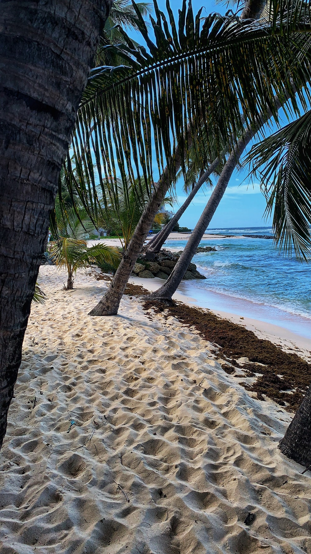 palm trees in beach