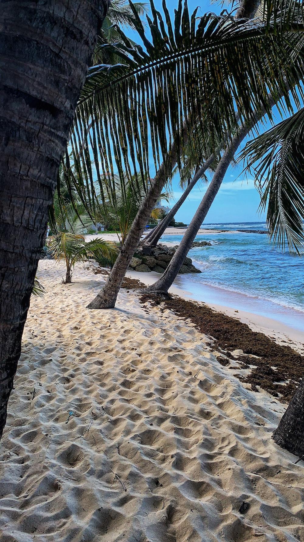 playa yelapa puerto vallarta jalisco mexico