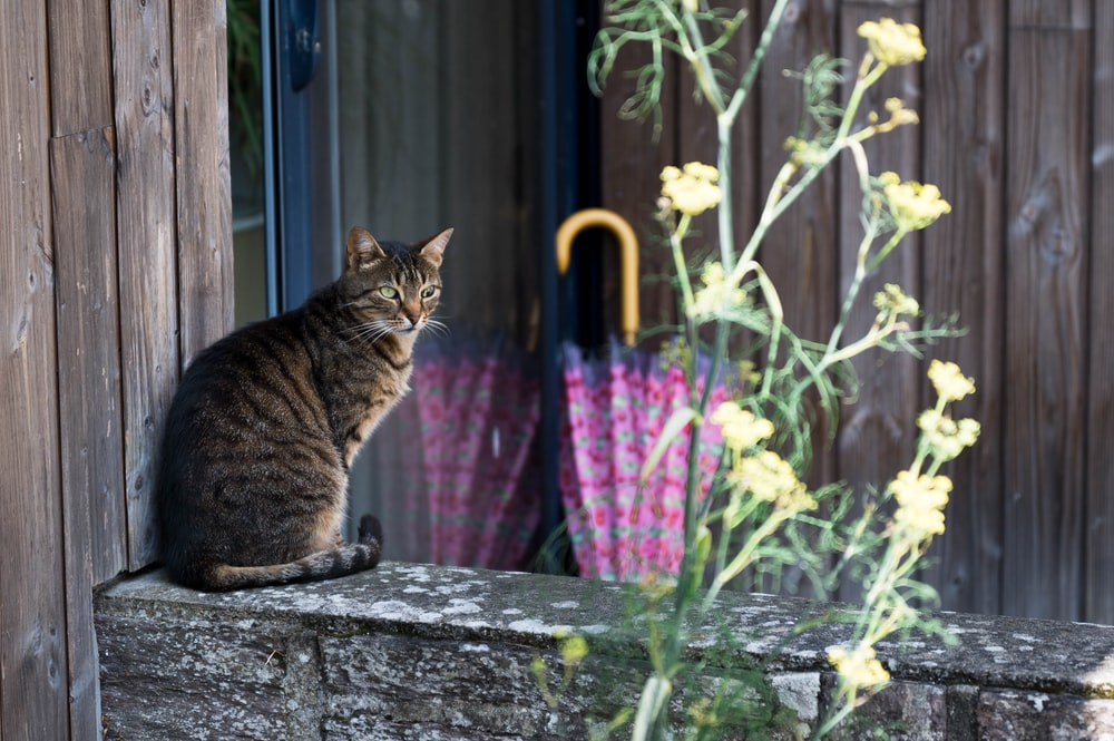 tabby cat near pink umbrella