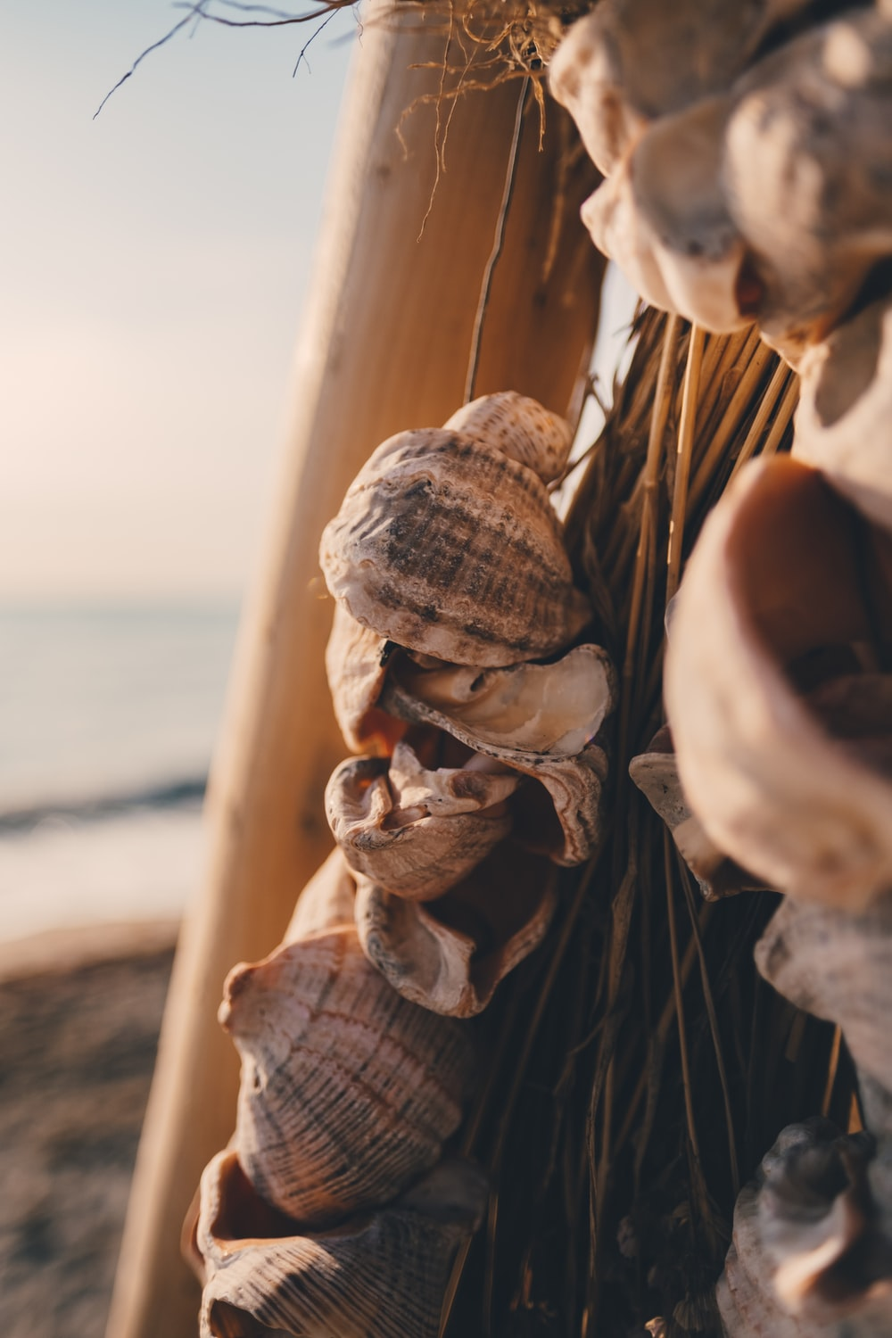 shallow focus photo of seashell