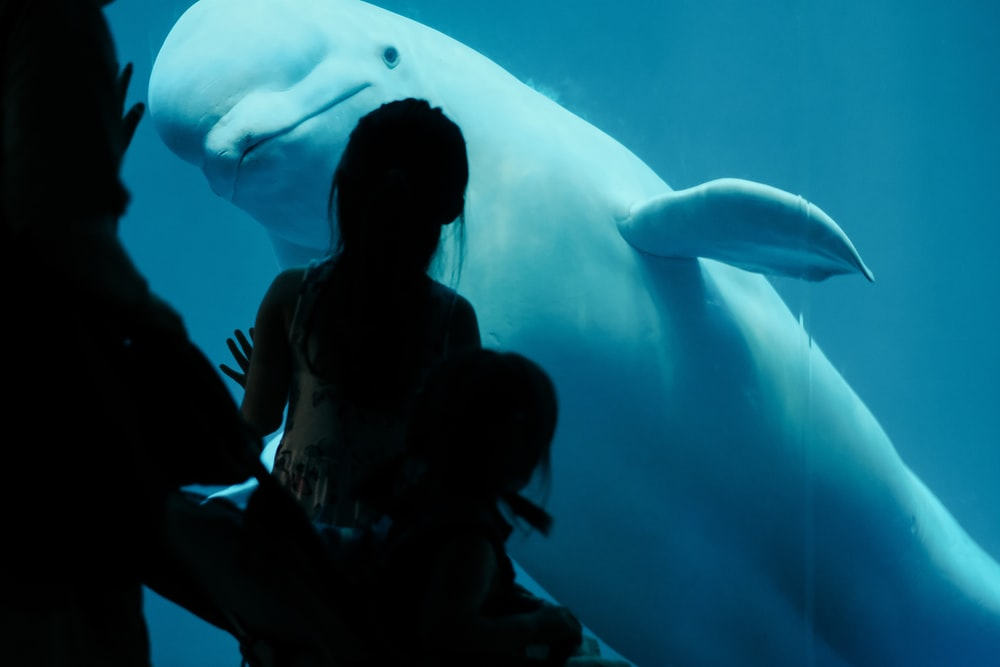 white dolphin near people