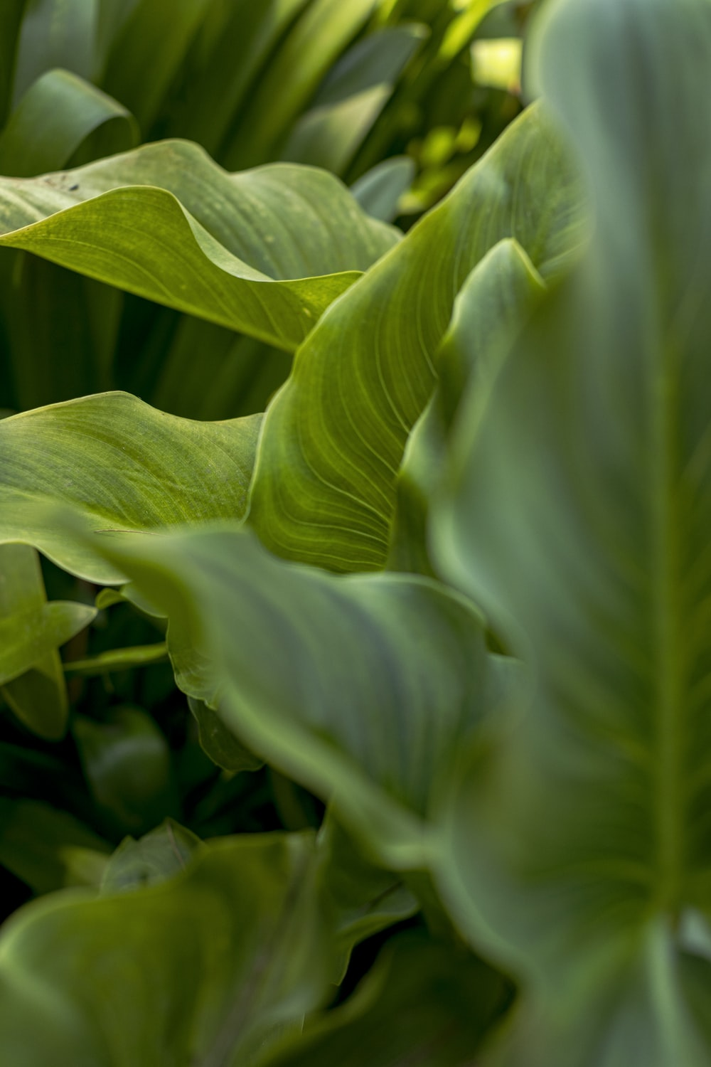 selective focus photo of green-leafed plant