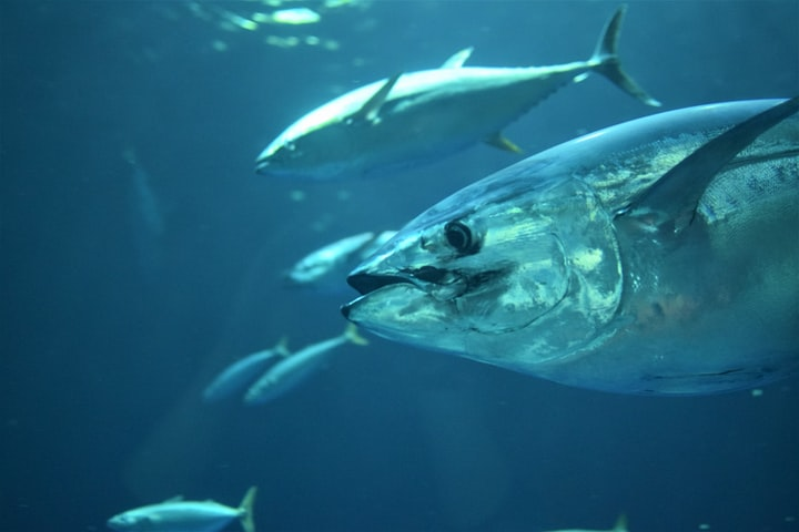 Is Eating Tuna worth the consequences?