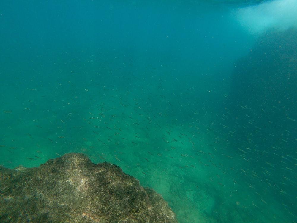 underwater photography of reef