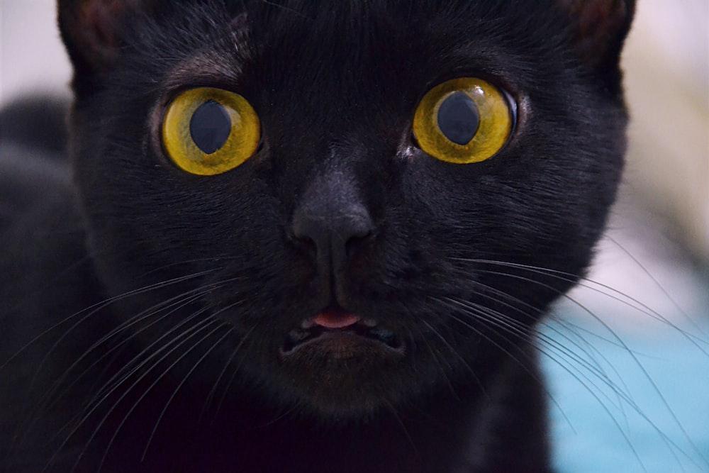short-fur black cat with green eyes