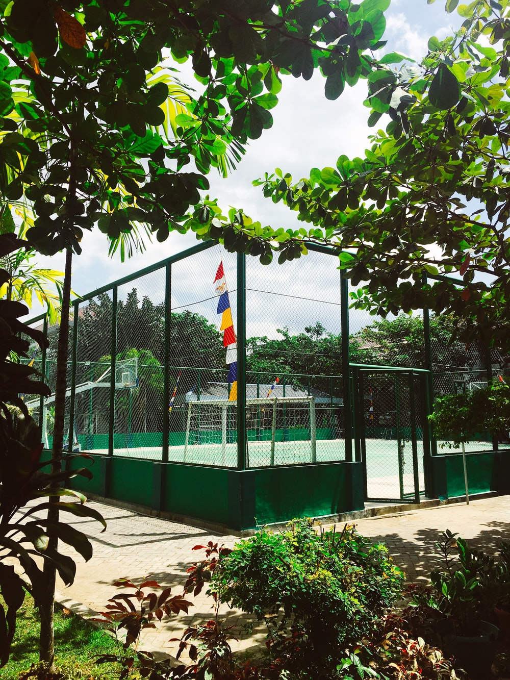 playing court near trees