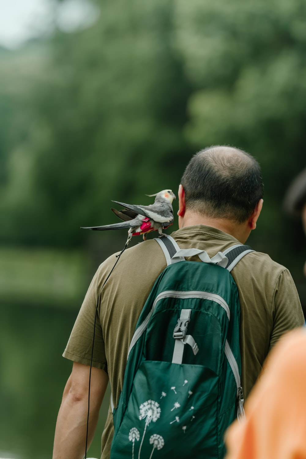 man wearing green backpack with gray bird on shoulder