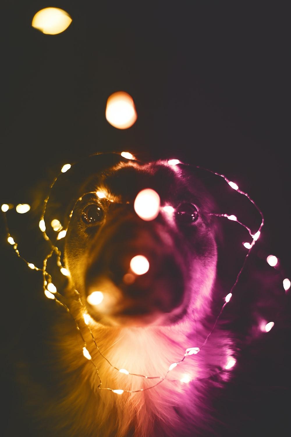 dog facing string lights