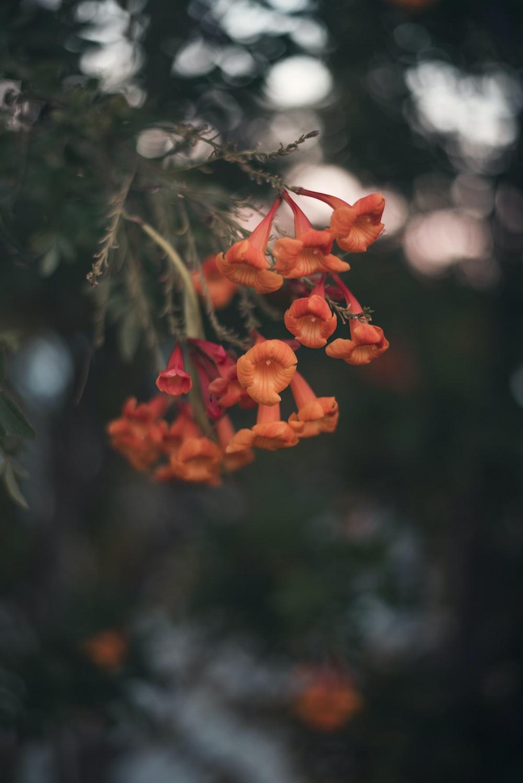 orange flower macro photography
