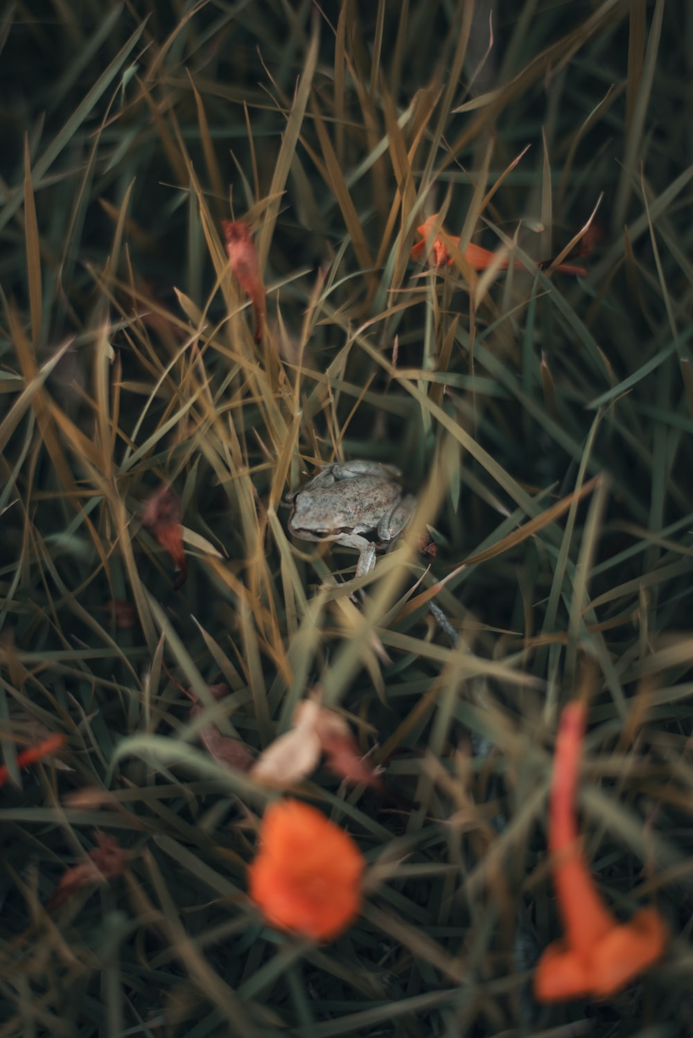 selective focus photography of gray frog