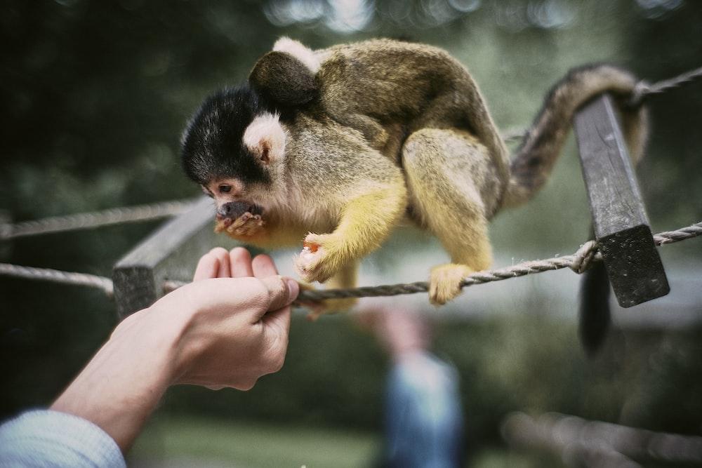 monkey on ladder