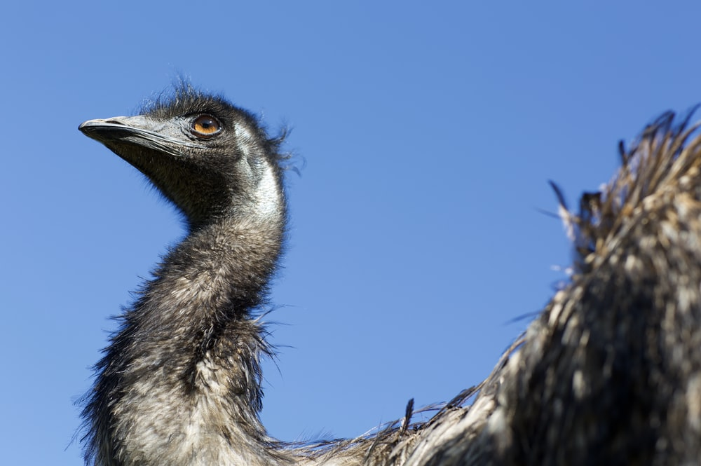 gray and black ostrich under clear blue sky during daytime