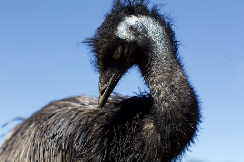gray ostrich under clear blue sky during daytime