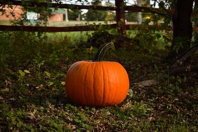 pumpkin near tree pumpkin teams background