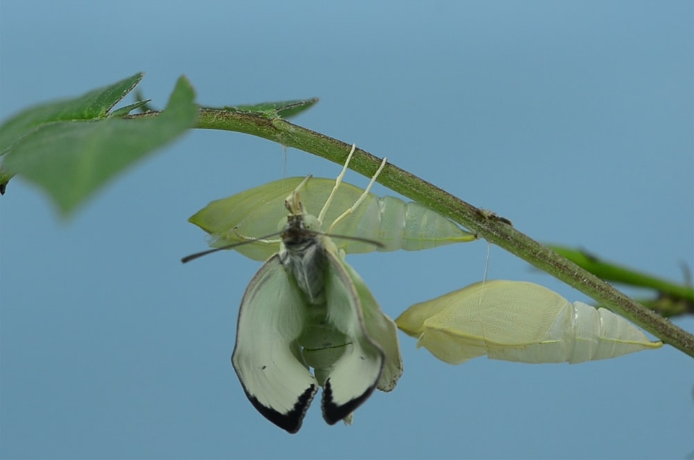 green insect on plant