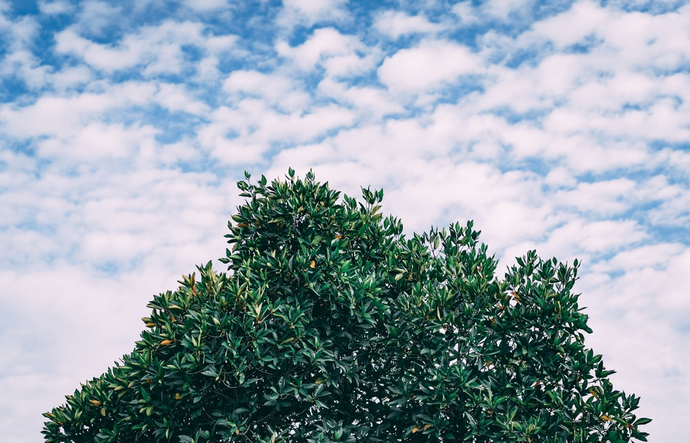 green tree under cloudy sky during daytime