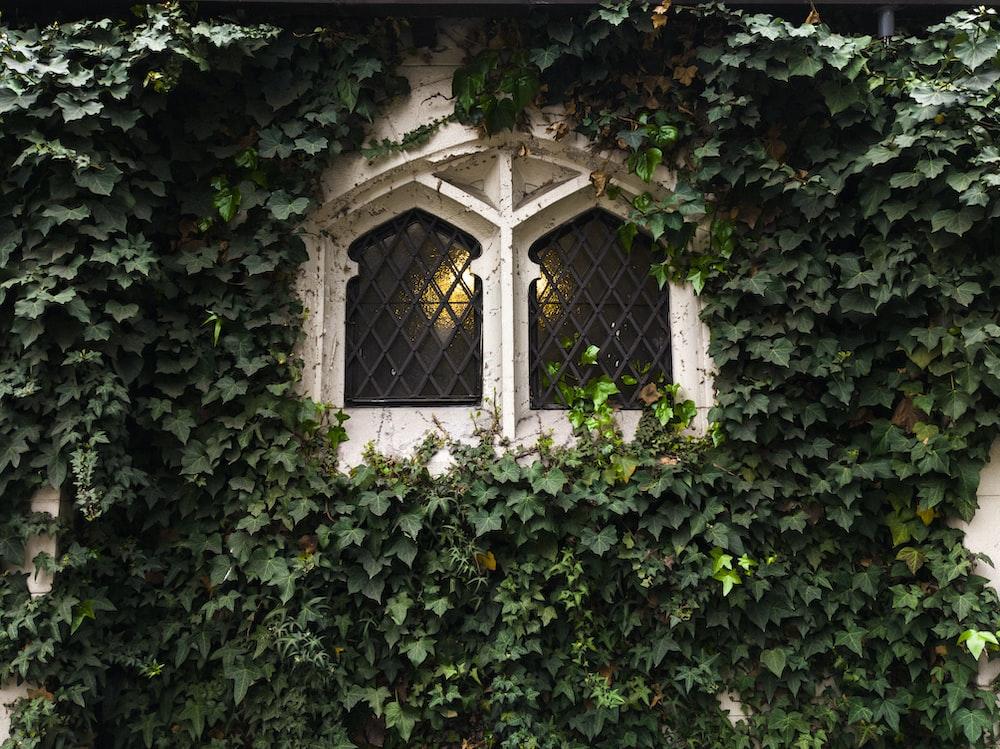 vines outside window