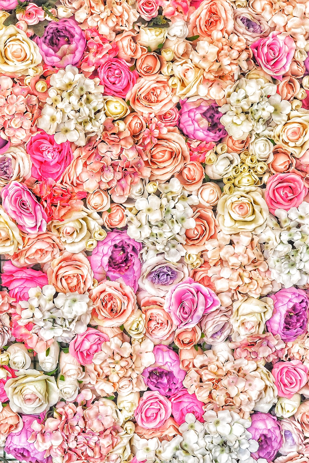 pink and beige roses