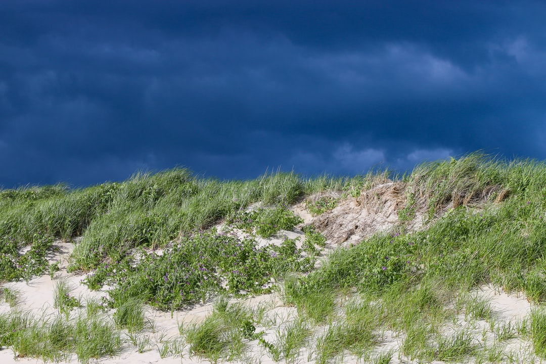 A storm approaches behind tall dunes in Massachusetts, bringing an incredible contrast to the landscape. Follow on Instagram @wildlife_by_yuri