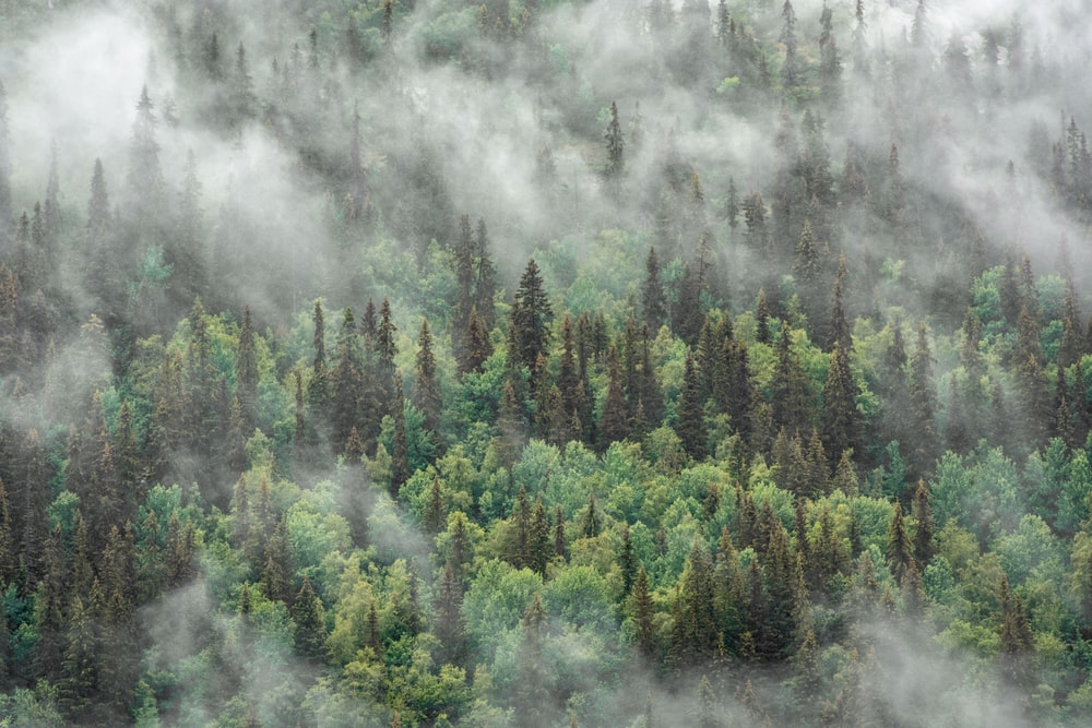 aerial-view of forest covered in fogs