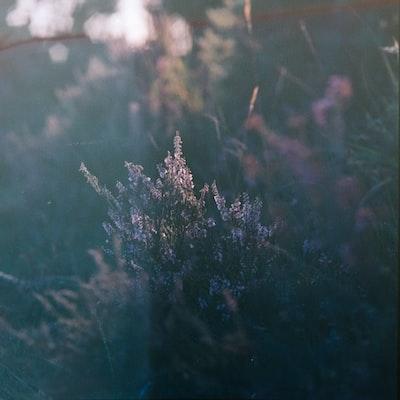 1604. Növények világa