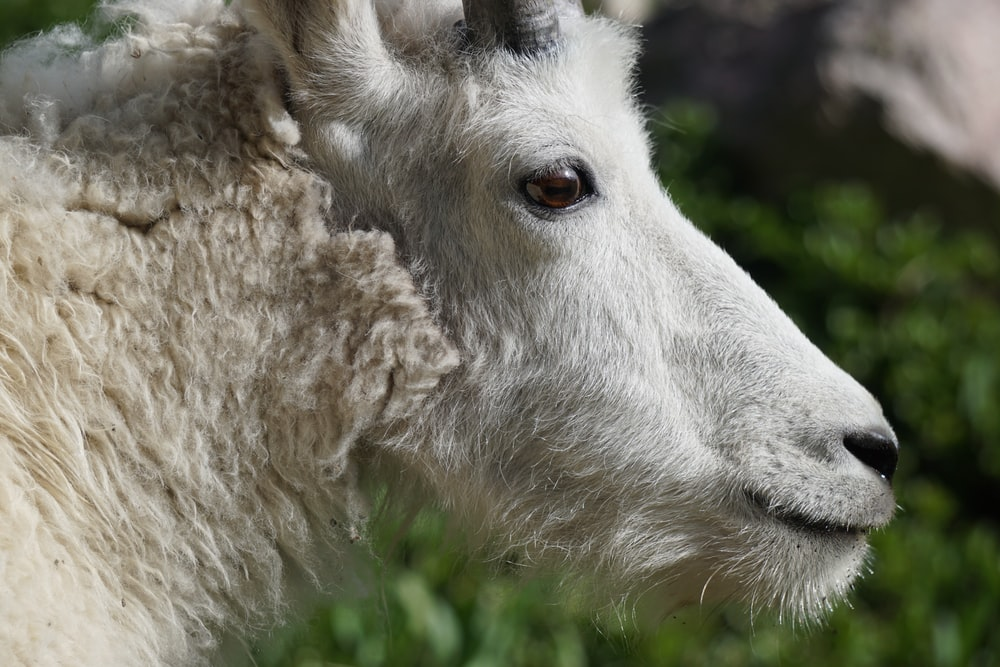 closeup photo of white animal